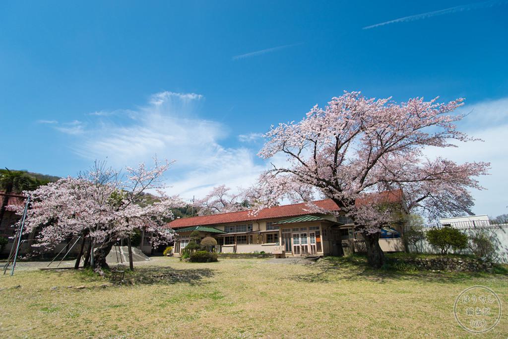 小川小学校下里分校は「桜」の名所