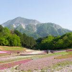 有料期間が終わった埼玉県秩父市の「羊山公園」へ芝桜を見に行ってみた