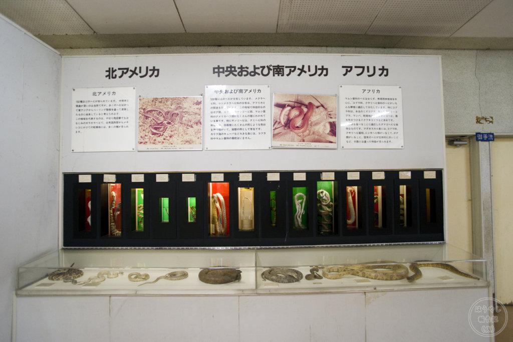 ヘビの標本とヘビのレプリカ