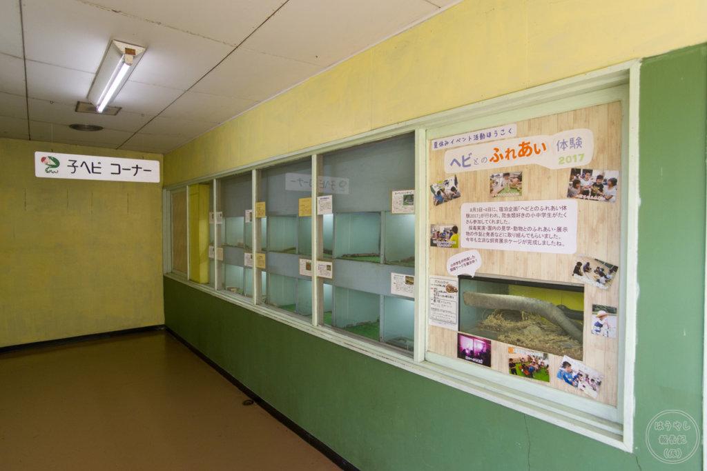 蛇毒研究室にある子ヘビの展示コーナー