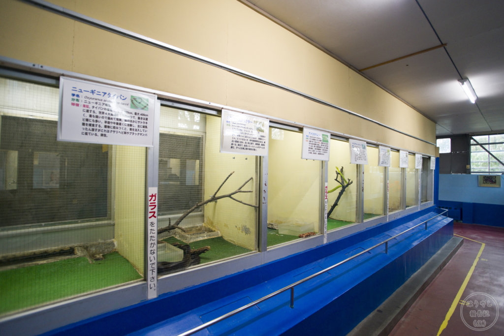 色々な種類の毒蛇が展示されている