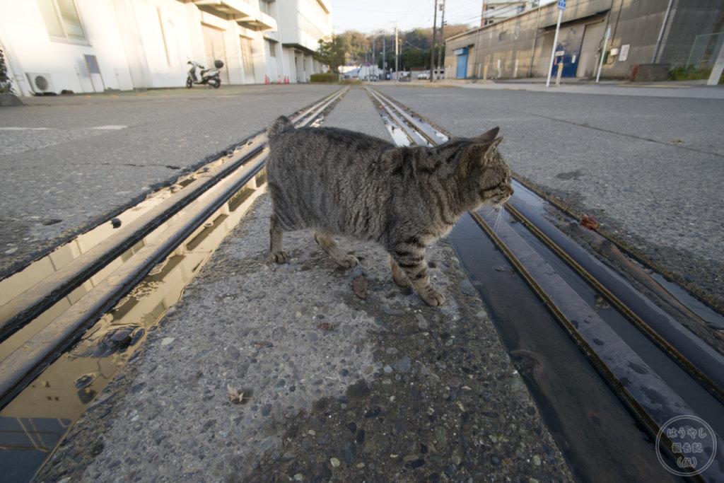 米軍田浦専用線(相模運輸倉庫専用線)を渡る猫