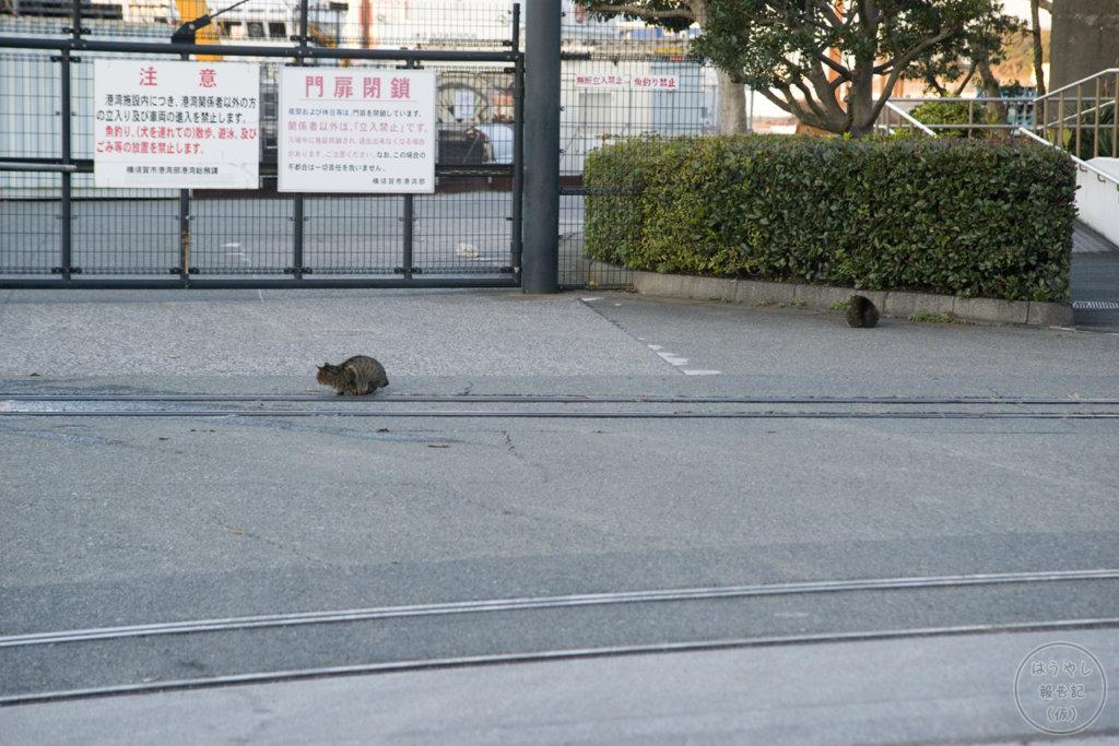 米軍田浦専用線(相模運輸倉庫専用線)に住みつく猫
