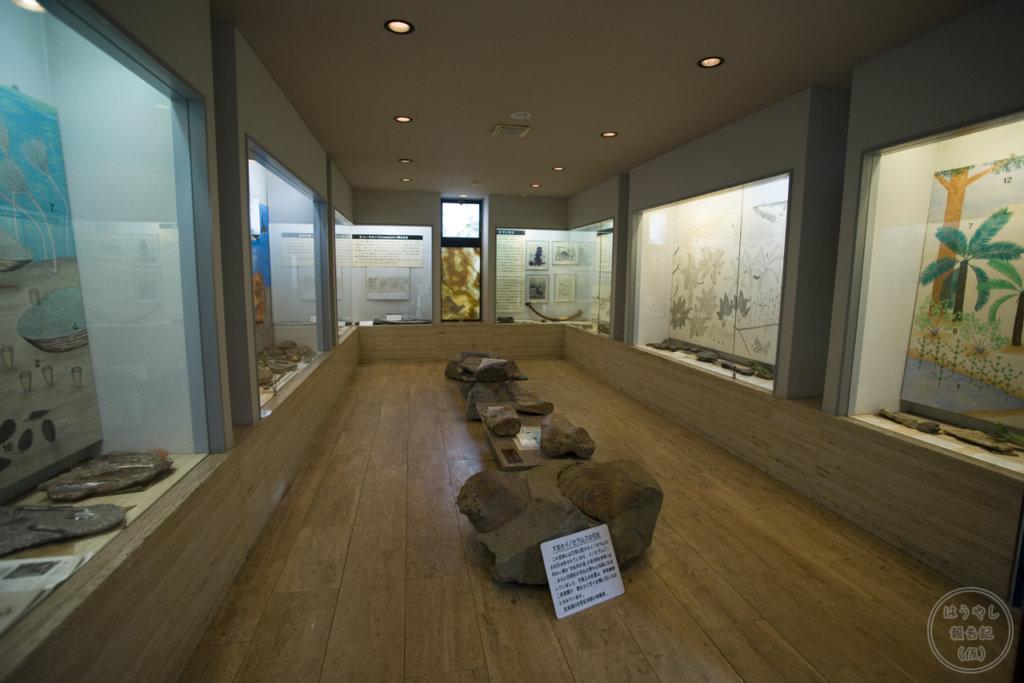 ロックハート城 ストーナカデミーにある化石コーナー