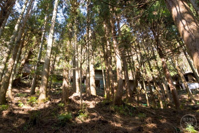 木々に囲まれる山掴集落