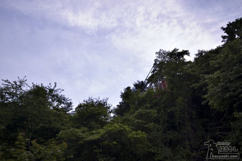 木々の中から顔を出した廃工場