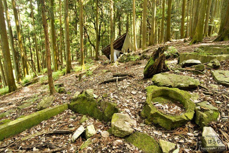 岩に生える青々とした苔