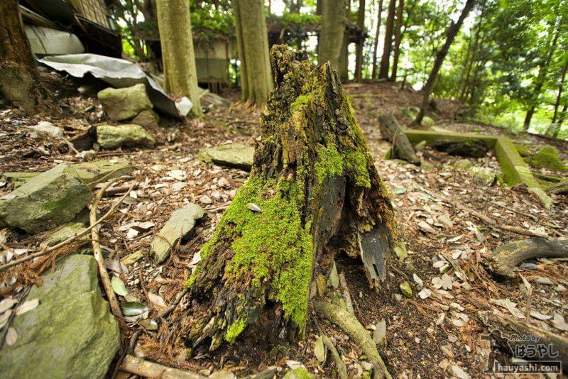 木に生える青々とした苔