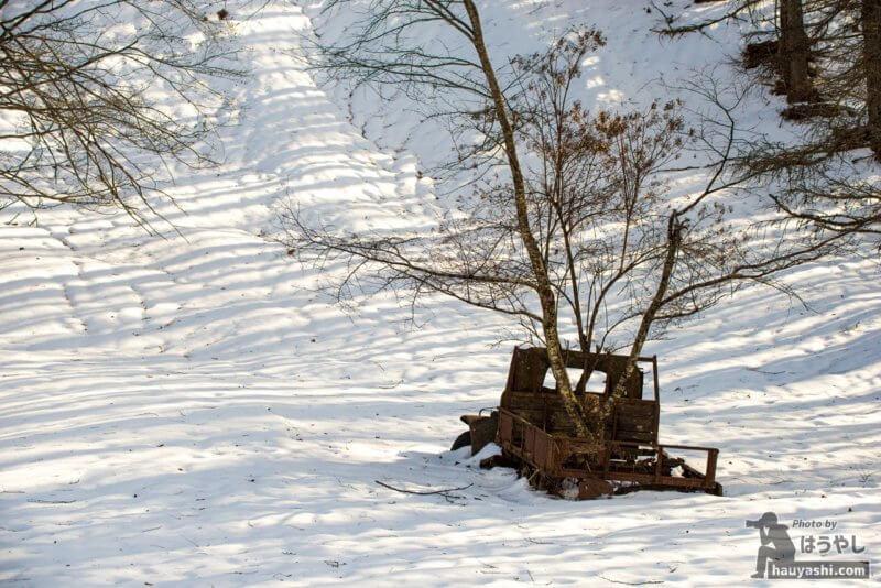 廃トラック(廃ダッチ)の荷台から生える木