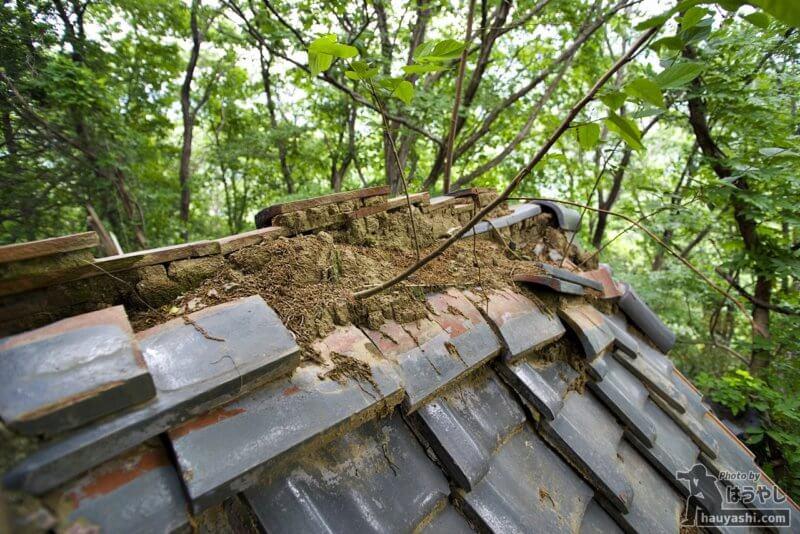 屋根から生える木