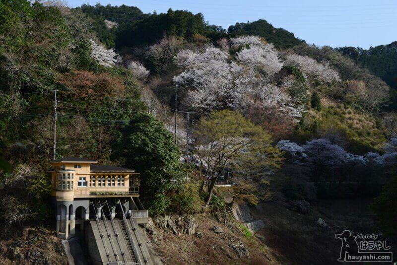 鎌北湖用水管理棟と満開の桜